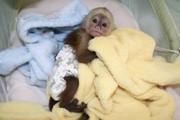 милые обезьяны только для вас