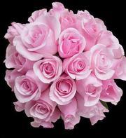 Цветы Оптом, Розы Оптом из Эквадора