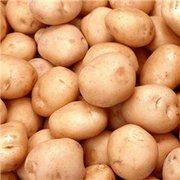картофель белый. красный